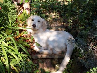 Niewidoczne ogrodzenia do ogrodu