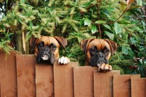 Wyznaczone strefy dla psów