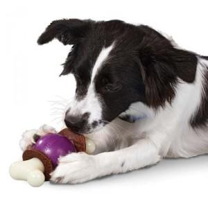 Zabawki marki Premier dla psów z niespożytą energią