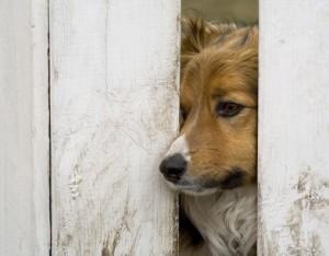 Koniec z ucieczkami psów