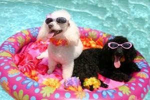 Psy i basen